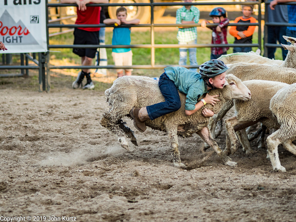 """26 JUNE 2019 - CENTRAL CITY, IOWA: A rider on a sheep during the """"Mutton Bustin' """" contest at the Linn County Fair. Mutton Bustin' is an event for young children. They ride sheep bareback for six seconds. Summer is county fair season in Iowa. Most of Iowa's 99 counties host their county fairs before the Iowa State Fair, August 8-18 this year. The Linn County Fair runs June 26 - 30. The first county fair in Linn County was in 1855. The fair provides opportunities for 4-H members, FFA members and the youth of Linn County to showcase their accomplishments and talents and provide activities, entertainment and learning opportunities to the diverse citizens of Linn County and guests.     PHOTO BY JACK KURTZ"""