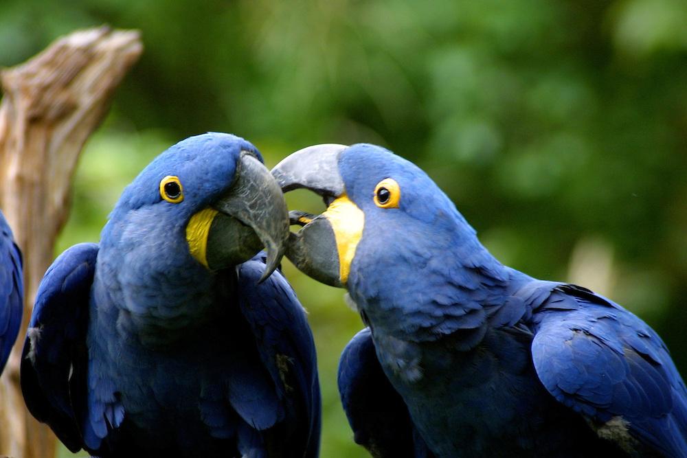 birds, parrot, animals