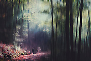 Hiker on his way through a forest in morning light - digitally edited photograph