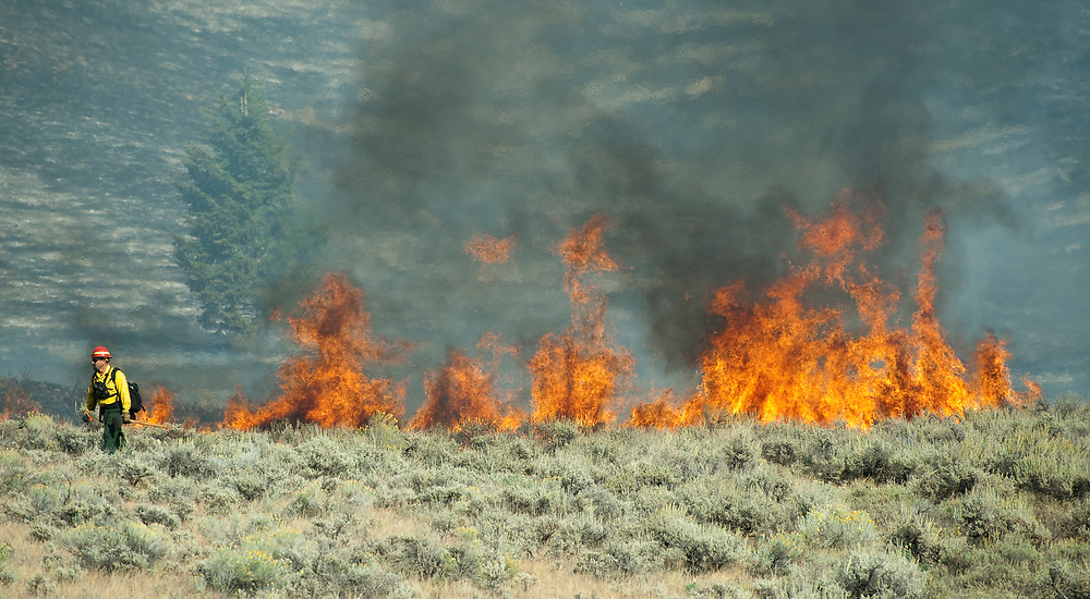PRICE CHAMBERS / NEWS&GUIDE<br /> A firefighter walks away from a wall of flame at Wilson Canyon on Saturday, where the Little Horsethief Fire was spotted around 3 p.m.