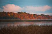 """Colorful broadleaf forest along River Daugava in foggy autumn morning, nature reserve """"Daugava pie Kaibalas"""", Latvia Ⓒ Davis Ulands   davisulands.com"""