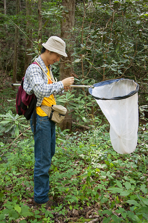 Entomologists colleting flies during a Diptera bioblitz run by Discover Life in America in the Great Smoky Mountains National Park in Tennessee, USA.