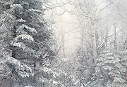Winter forest with snow on trees