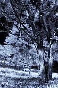 Solarized Trees 1