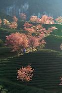 Sapa in springtime Phong cảnh Sapa