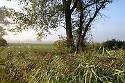 Morgenstimmung Naturschutzgebiet Radolfzeller Aachried, Radolfzell, Bodensee, Untersee, Baden-Württemberg, Deutschland