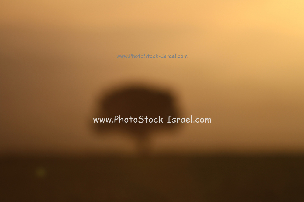Atomic mushroom in the distance - Actually a lone tree in the desert
