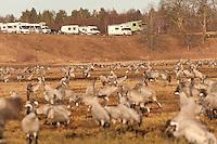 Birdwatchers, Eurasian Crane (Grus grus), Lake Hornborga, Sweden. April 2009. Mission: Sweden (crane and swan)