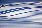 Abstract pattern made by the shadows of aspen trees on snow, Uncompahgre National Forest, Colorado.
