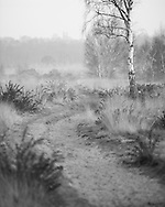 A sandy path winds across Whitmoor common on a misty spring morning. Picture by Andrew Tobin/Tobinators Ltd