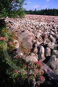 Hickory Run State Park, PA, ice age boulder field, Poconos