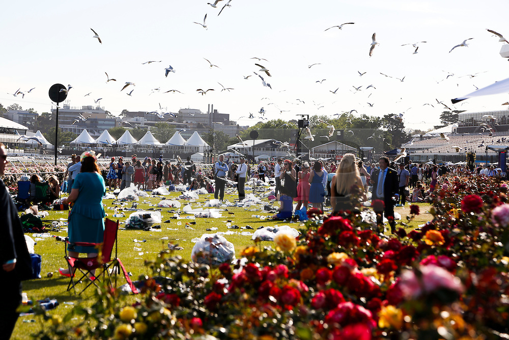© Licensed to London News Pictures. 5/11/2013. Seagulls flock over the lawn areas at the conclusion of the day during Melbourne Cup Day at Flemington Racecourse on November 5, 2013 in Melbourne, Australia. Photo credit : Asanka Brendon Ratnayake/LNP