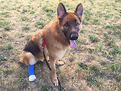 EXCLUSIVE - Dog Chewed Off Own Foot