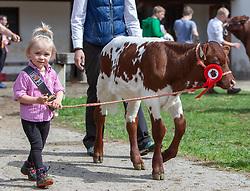 29.04.2018, Maishofen, AUT, XII Weltkongress Pinzgauer Rind, im Bild Jungzüchterin mit ihren Kalb (Bambini) // Young breeder with her calf (Bambini) during the XII Pinzgauer cattle World Congress in Maishofen, Austria on 2018/04/29. EXPA Pictures © 2018, PhotoCredit: EXPA/ Stefanie Oberhauser
