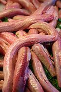 Fresh Palombo - Dog Fish - Venice Rialto Fish Market