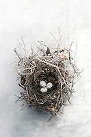 Still Life Photography of a bird nest. (2017 calendar exclusive Amber Lotus)