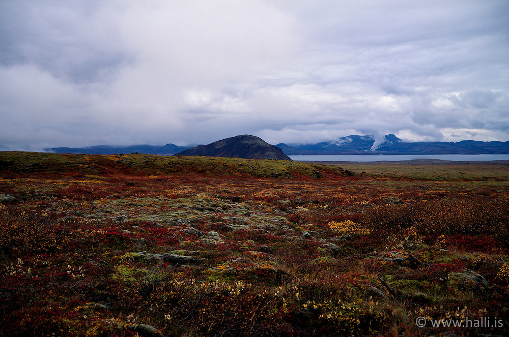 Hauslitir að þIngvöllum / Colorful autumn at Thingvellir