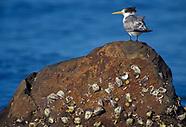 Fotoreise Tasmanien 2