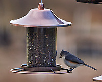 Tufted Titmouse. Image taken with a Nikon Df camera and 300 mm f/4 telephoto lens (ISO 320, 300 mm, f/4, 1/320 sec)