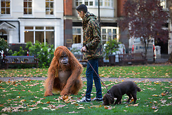 EDITORIAL USE ONLY An ultra-realistic animatronic Orangutan appears in Soho Square in London to highlight the threat to the survival of the species due to deforestation caused by palm-oil production, following Iceland's Christmas advert being banned.