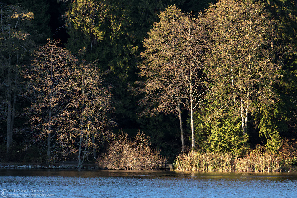 Sunset light on trees along the shore of Lost Lagoon at Stanley Park in Vancouver, British Columbia, Canada