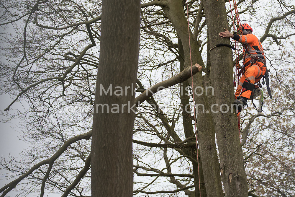 A tree surgeon working on behalf of HS2 Ltd fells a tree in ancient woodland at Jones Hill Wood in the Chilterns AONB as part of works for the HS2 high-speed rail link on 28th April 2021 in Wendover, United Kingdom. Felling of Jones Hill Wood, which contains resting places and/or breeding sites for pipistrelle, barbastelle, noctule, brown long-eared and natterer's bats and is said to have inspired Roald Dahl's Fantastic Mr Fox, has recommenced after a High Court judge yesterday refused environmental campaigner Mark Keir permission to apply for judicial review and lifted an injunction on felling for the rail infrastructure project.