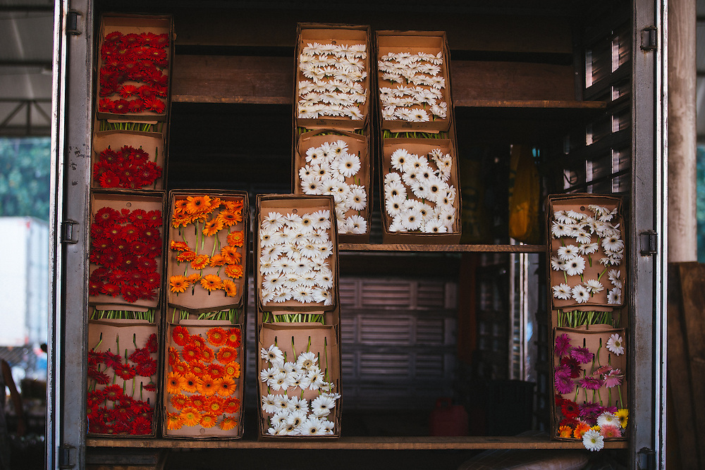 Flowers are displayed in the back of a truck in Rio's CADEG Market.