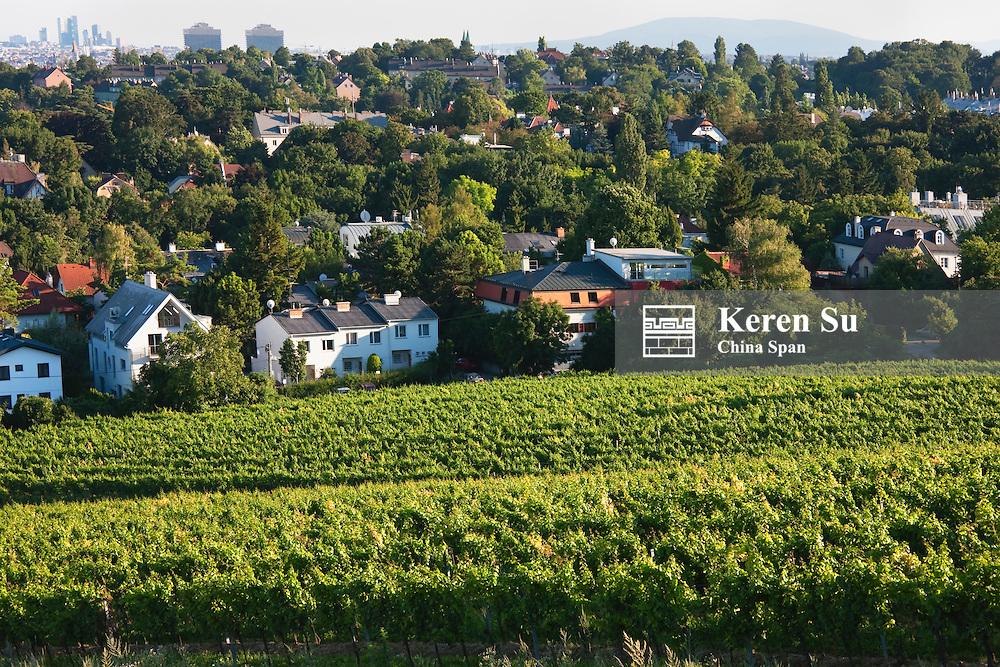 Vineyard, cityscape of Vienna in the distance, Austria