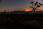 The remains of Joshua trees and other foliage dot the charred landscape after the Bobcat Fire moved through the area, and can still be seen burning in the distance, in Valyermo, CA on September 23, 2020.