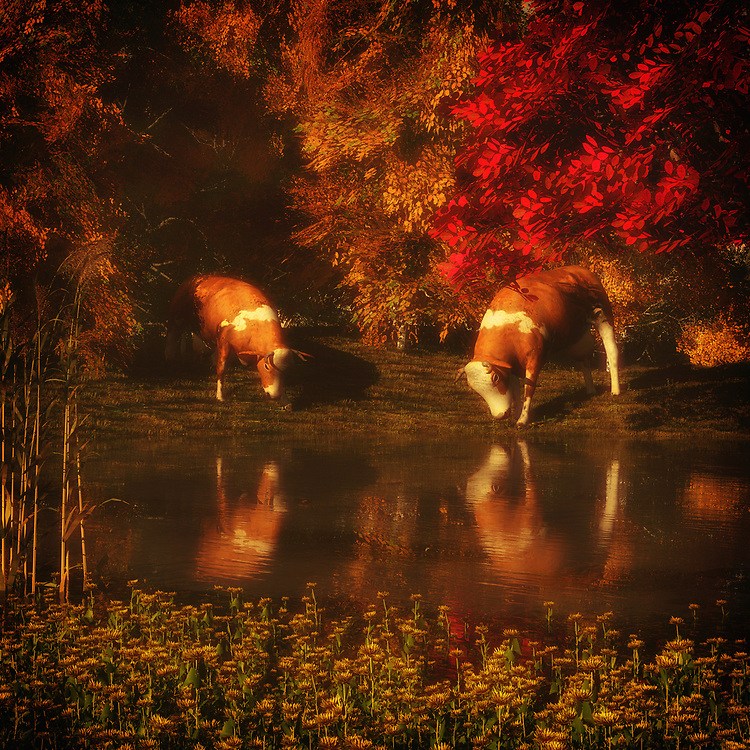 On a beautiful day, we feel the ease of watching two cows drinking water from what is likely a small lake. They are absorbed wholly in their activity. There is something profoundly serene about this visual. We watch the cows relaxing, enjoying the water. We take in the amazing natural scene that surrounds them. There are some truly marvelous details in these visuals. Within the details, we find it easy to lose ourselves in everything this quiet piece has to say. This is a moment in time we can appreciate. Available as canvas wall art or as framed wall art. .<br />