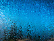 coniferous trees are seen through fog and a raindrop covered window.