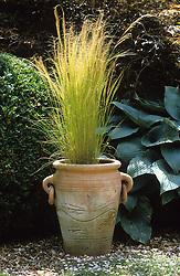 Stipa tenuissima in a tall terracotta pot