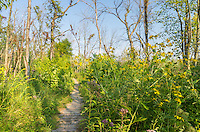This part of the trail was really colorful with many wildflowers on both sides. It was just before an area that the map calls Paradise Valley.