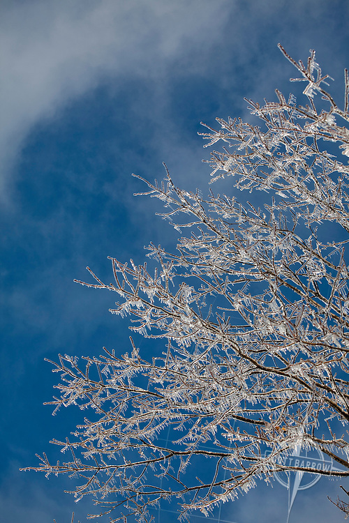 Ice encasing bare tree branches after winter storm.