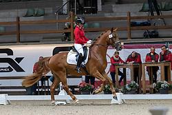 083, Sandor Hit van't Steenputtenhof, Nestor Lotte<br /> Hengstenkeuring BWP- Azelhof - Lier  2021<br /> <br /> © Hippo Foto - Dirk Caremans<br /> 12/04/2021