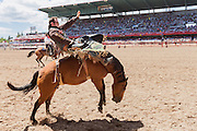 Bareback rider Matt Bright of Fort Worth, Texas hangs on to Mean Jean at the Cheyenne Frontier Days rodeo at Frontier Park Arena July 25, 2015 in Cheyenne, Wyoming. Frontier Days celebrates the cowboy traditions of the west with a rodeo, parade and fair.