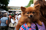 Small dog on Portobello Road market, Notting Hill, West London. This famous Sunday market is when the antique stalls come out as well as the food stalls.