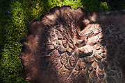 Detail of a large textured mushroom growing from moss-covered ground in Wrangell-St. Elias National Park, Alaska.