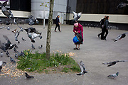 An ederly and bent lady feeds pigeons at Elephant & Castle, London borough of Southwark. Disturbed by something, the birds take to flight and escape whatever dangers are on this area of pavement, recently redeveloped. The stooping woman finds more crumbs to drop next to an urban tree, seen as a menace to hygiene by others. A single pigeon takes-off and looks as if it is perched on the woman's head though it is in fact several metres distant.