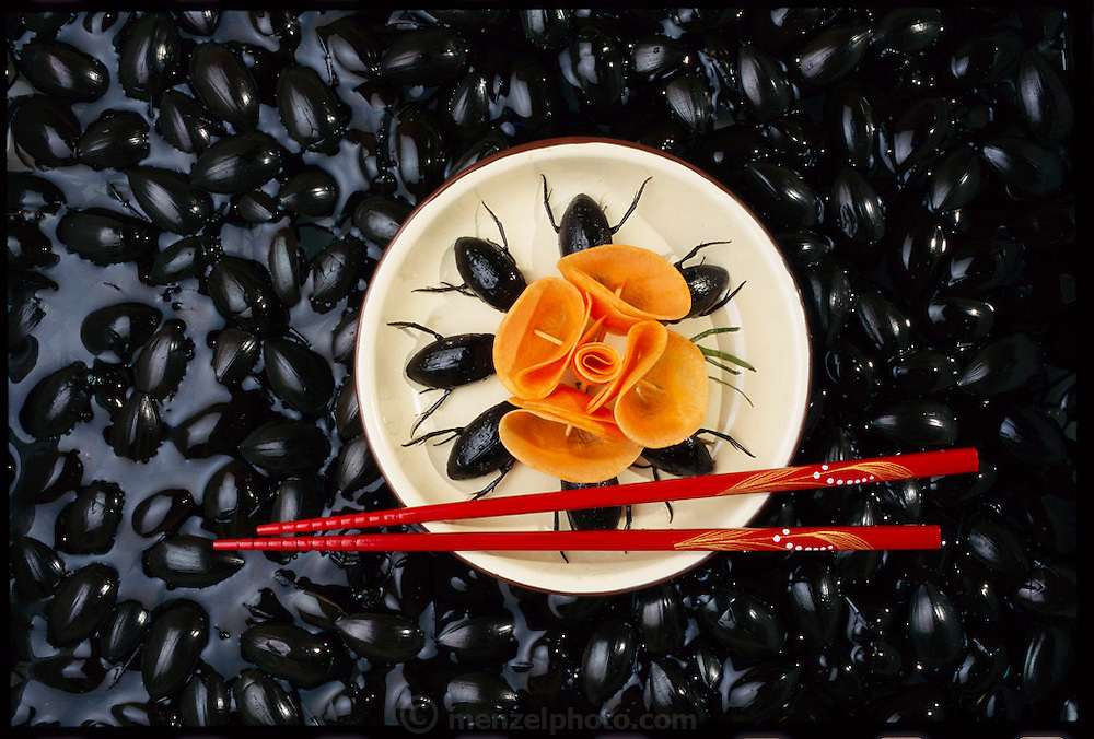 Water beetles marinated in ginger and soy sauce with a carrot garnish against a background of swimming water beetles, Guangzhou Province, China. (Man Eating Bugs: The Art and Science of Eating Insects page 85 Inset.  See also page 6)
