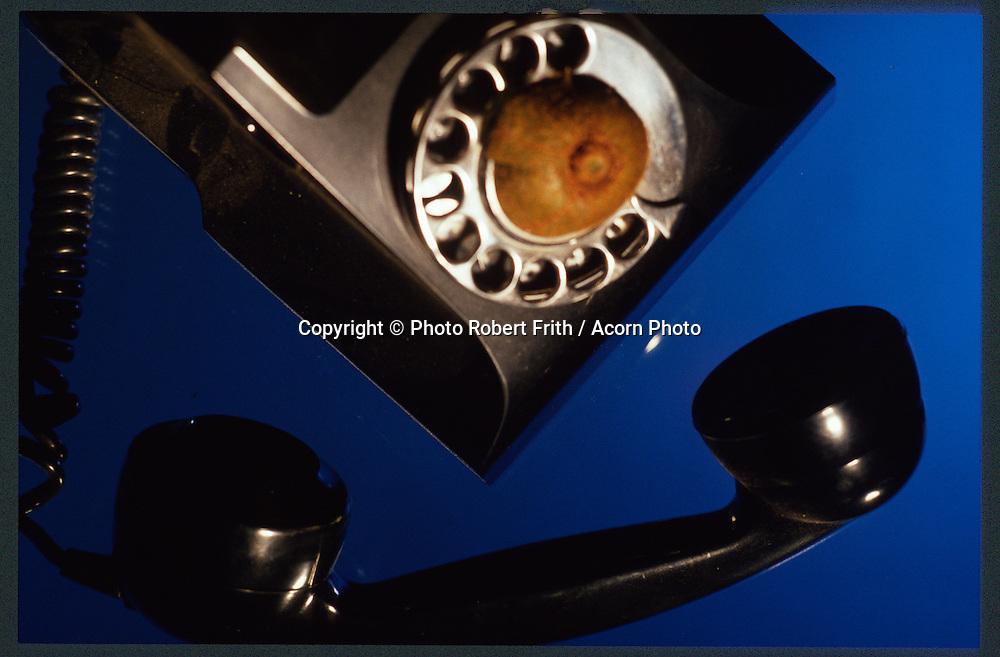 The bakelite era, telephone with kiwi fruit on dial