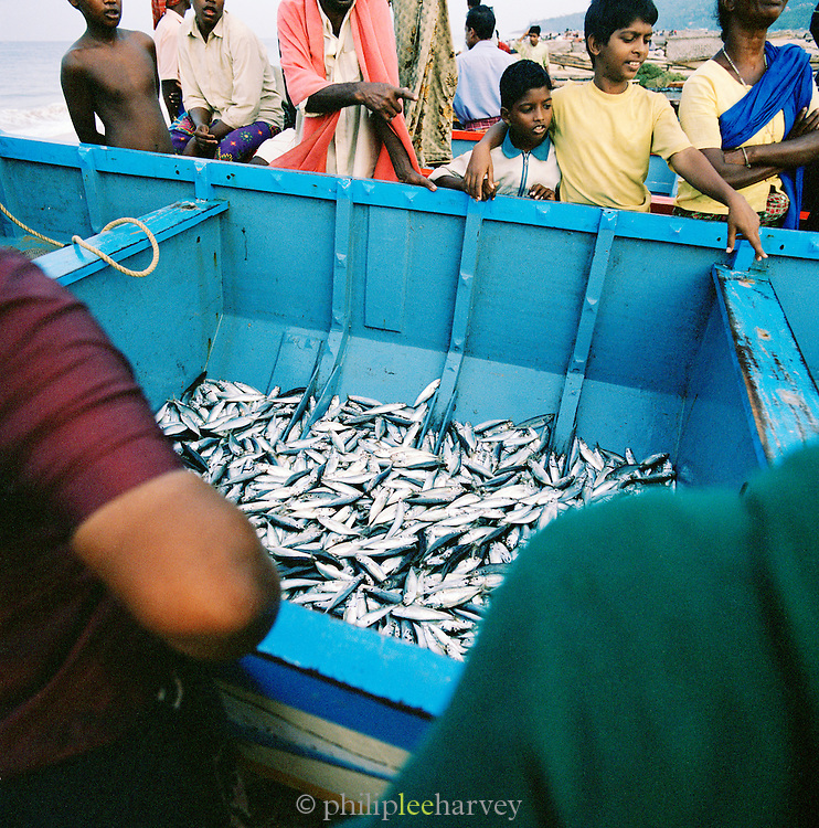 Fish on sale direct from the fishermens boat, Kerala, India