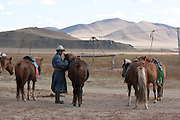 Horses tethered for tourist horse rides at Gun-Galuut Nature Reserve, Mongolia