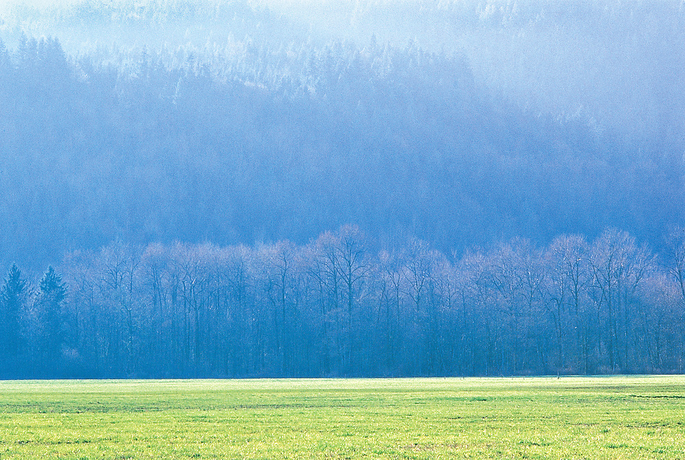 Late Afternoon Sunlight on Forested Hillside and Grassy Pasture Acme Washington