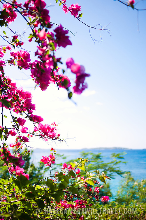 Tropical flowers frame an ocean view in the Caribbean, in the US Virgin Islands. With copyspace and narrow depth of focus on flowers.