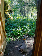 Outhouse guardian
