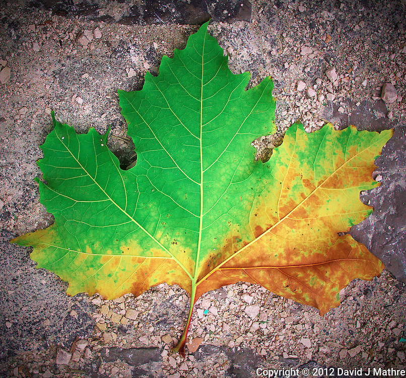 Fall Leaf on the Ground in Grazalema, Spain. Image taken with a Leica X2 camera (ISO 200, 24 mm, f/5.6, 1/500 sec).