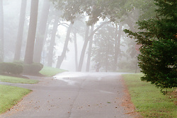 Heavy fog shrouds the trees in Rehoboth Beach, Del., Saturday, Aug. 17, 2019. (Photo by D. Ross Cameron)