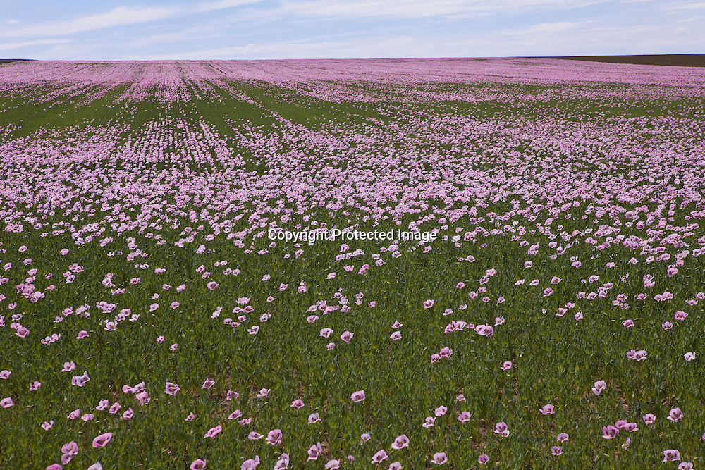 wild flowers in champagne, France