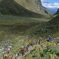 A pack train for a National Geographic archaeology expedition descends from Choquetecarpo Pass (5100+ meters) in Peru's Cordillera Vilcabamba mountains, en route to Cerro Victoria at the end of the canyon (Quebrada Moyoc).